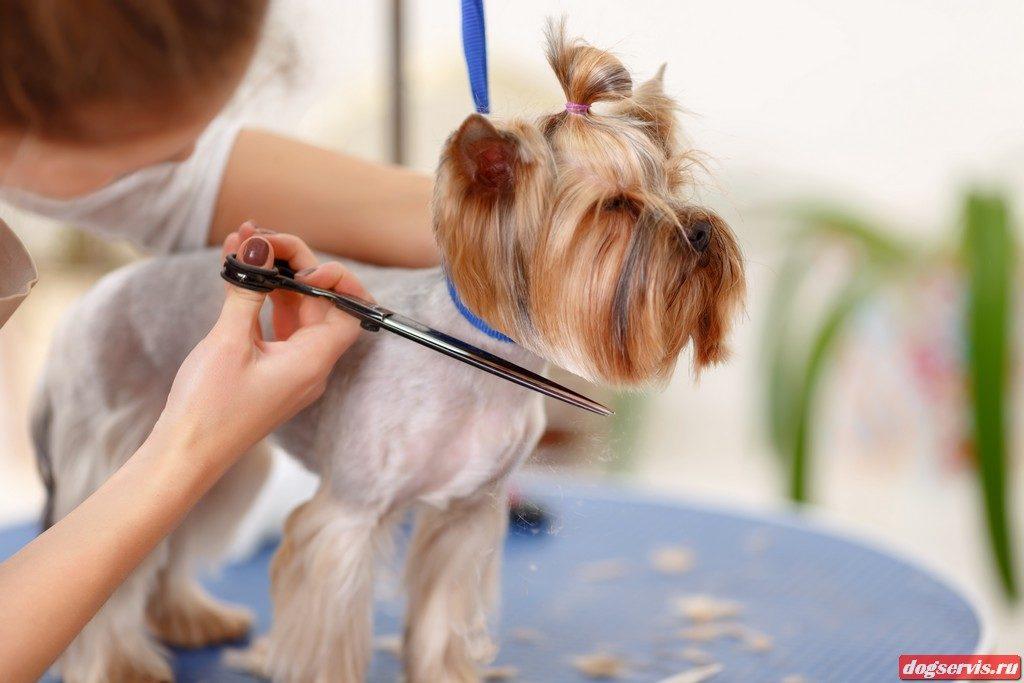 подстричь собаку в Калининграде в салоне Догсервис